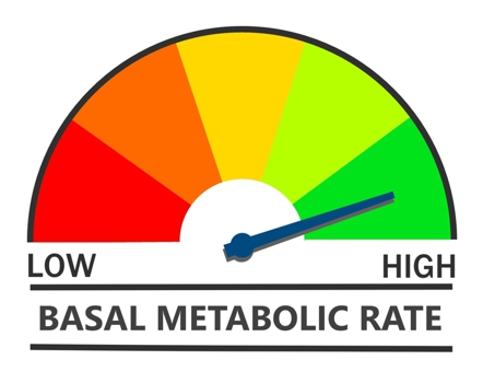 Basal Metabolic Rate - Individually Tailored HCG Weight Loss